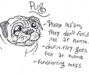 dogs, funny, and pugs image