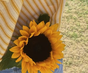 yellow, sunflower, and aesthetic image