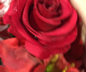 flou, rose, and roses image