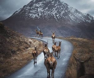highlands and nature image