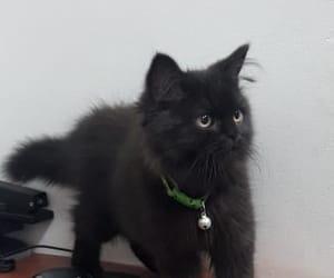 black, gato, and negro image
