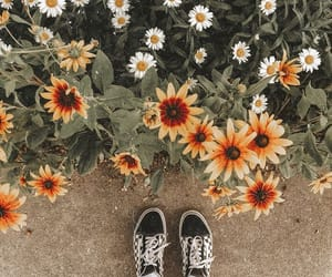 daisy, flowers, and sunflowers image