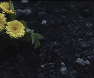 flower, joseph, and josh image