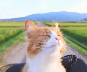 cat, kitty, and nature image
