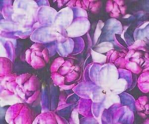 Image by Lili13