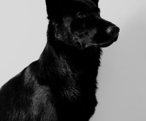 dog, black, and aesthetic image