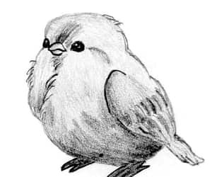 animal, bird, and art image