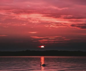 sunset, sky, and Swan image