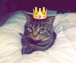 animal, animals, and cat image