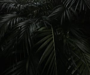 dark, garden, and palm leaf image