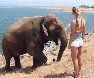 elephant, Sri Lanka, and srilanka image
