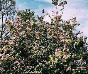 aesthetic, clouds, and flowers image