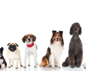 article, dog, and breeds image