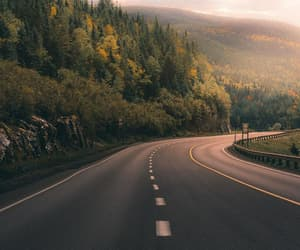 forest, nature, and road image