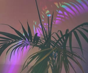 aesthetic, plant, and colors image