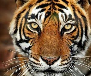 aesthetic, amazing, and animals image