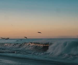 birds, nature, and wave image