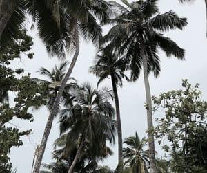 green, Maldives, and palm trees image