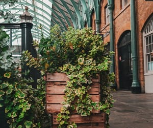covent garden, lifestyle, and green image