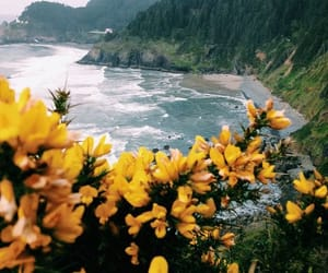 beach, garden, and flower image