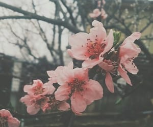 beautiful, cherry blossom, and dark image