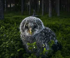 forest, photography, and owl image