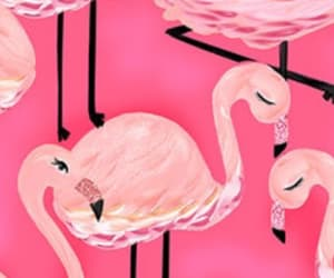 background, Chick, and flamingo image