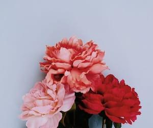bloom, flowers, and lockscreen image
