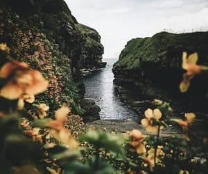 flowers, landscape, and ocean image