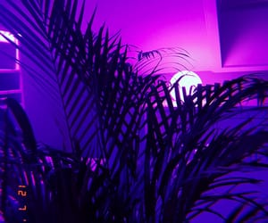 aesthetic, led, and palmtree image