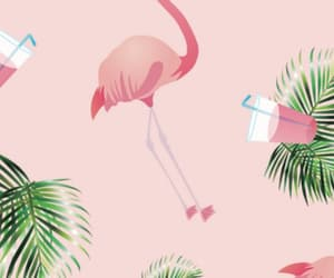 background, flamingo, and tropical image