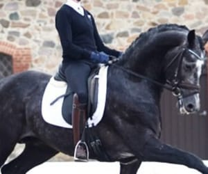 dressage, equestrian, and ride image