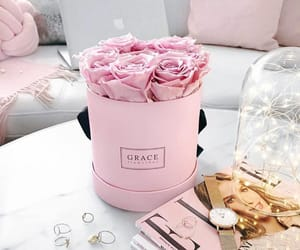 rose, home, and pink image
