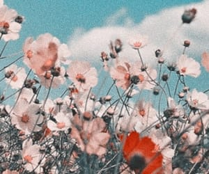 header, flowers, and aesthetic image