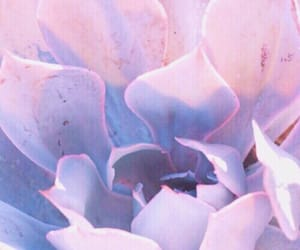 aesthetic, pink, and plants image