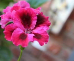 brown, petals, and pink image