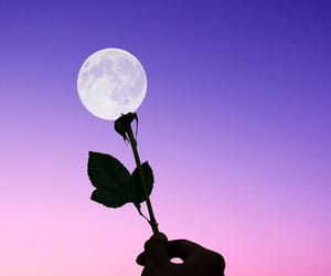moon, rose, and tumblr image