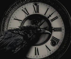 bird, bw, and black image