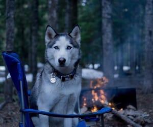 cute animals, cuteness, and dog image
