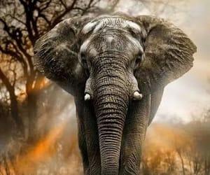 elephant and sunshine image
