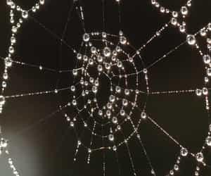 art, spiderweb, and dew image