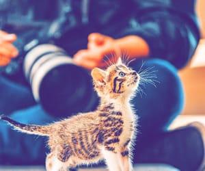 animal, tumblr, and animals image