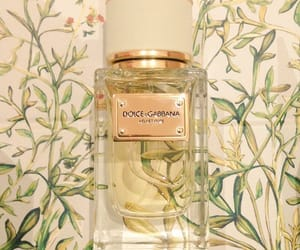 D&G, Dolce & Gabbana, and fragrance image