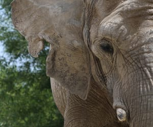 animals, elephant, and toronto zoo image