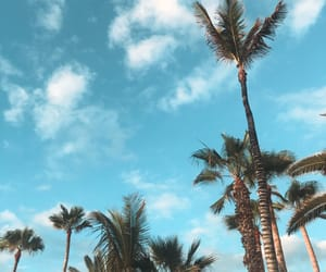 canary islands, tenerife, and palms image