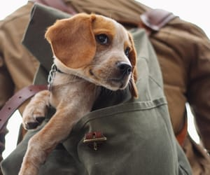 backpack, dog, and photography image