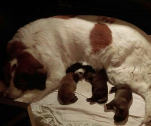 adorable, babys, and mummy image