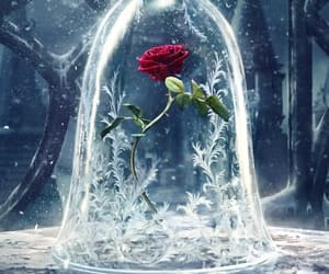ice, rose, and wallpaper image