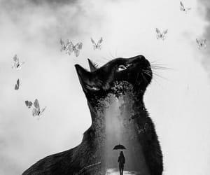 animals, beauty, and nice image