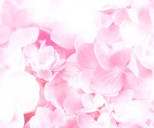 floral and pastel image